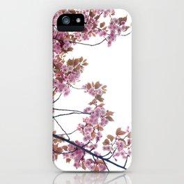 Looking up Through Norway's Sakura Spring iPhone Case