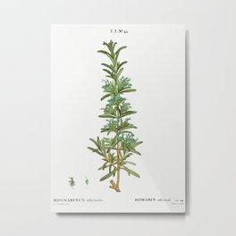 Rosemary, Rosmarinus officinalis from Traité des Arbres et Arbustes que l'on cultive en France en pl Metal Print