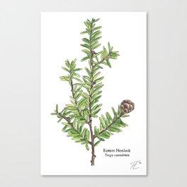 Eastern Hemlock (Tsuga canadensis) Plate II Canvas Print