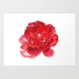 Red Double Tulip Watercolor Art Print