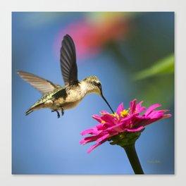 Hummingbird Flight Canvas Print