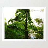 Ferns up-close  Art Print