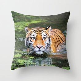 Tiger | Tigre Throw Pillow