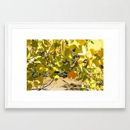 Fall Aspens Framed Art Print