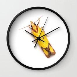 Sulphur Knapweed Moth (Agapeta zoegana) Wall Clock