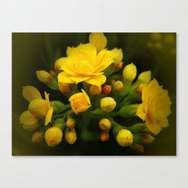 Tiny Yellow Blossoms Canvas Print