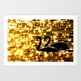Swans, always together Art Print