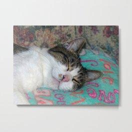 Honey Sleeping Metal Print