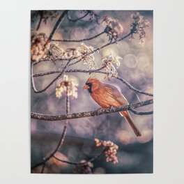Northern Red Cardinal Spring Poster