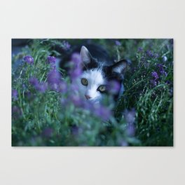 Just another kitty among the flowers Canvas Print