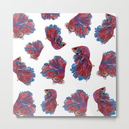 Ocean Theme- Red Blue Betta Fish Metal Print