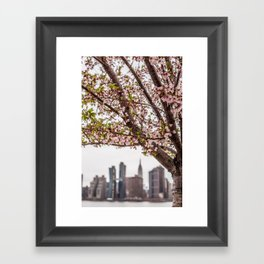cherry blossoms in bloom over nyc skyline Framed Art Print