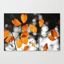 Orange Leafs (Color) Canvas Print