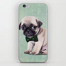 Angry Pug iPhone & iPod Skin