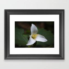 Trillium flower. Framed Art Print