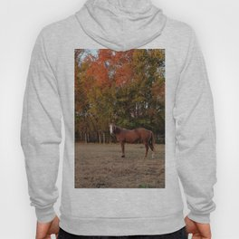 Where is My Horse Hay? Hoody
