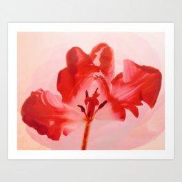 Transparent Red Flower Art Print