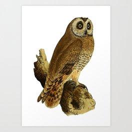 Cape-eared Owl Art Print