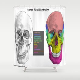 Human Skull Anatomy Shower Curtain
