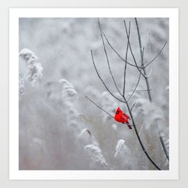 Red Robin Winter Snow (Color) Art Print