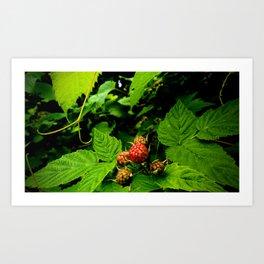 Almost Time for Rasberries Art Print