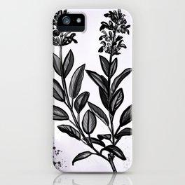 Sage Botanical Illustration iPhone Case
