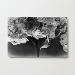 Miguel's Hydrangea 3 Metal Print