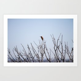 Bolsa Chica Wetlands Hummingbird Art Print