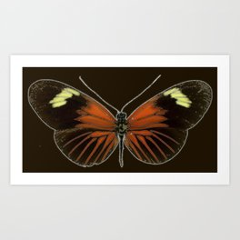 Untitled Butterfly Art Print