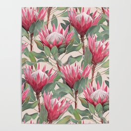 Painted King Proteas on cream Poster