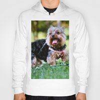 yorkie Hoodies featuring Darling Yorkie by IowaShots