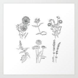 Edible Flowers Cottage Garden Zinnias Chamomile Calendula Pineapple Sage Lavender Sketchbook Illustration Black And White Botanicals  Art Print