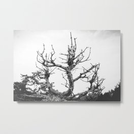Lifeless Until Spring Metal Print