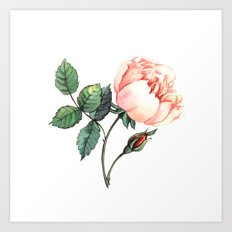 Illustration with watercolor rose Art Print