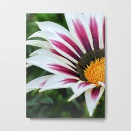 Treasure flower.  Metal Print