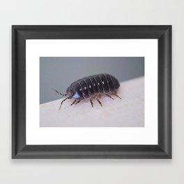 Potato Bug Framed Art Print
