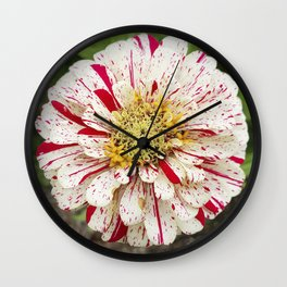Candy Cane Zinnia Wall Clock