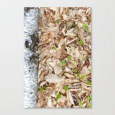 forest magic - marie Canvas Print