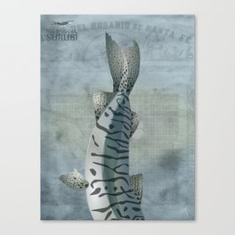 Surubí - Paraná River Fish Canvas Print