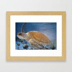sea turtle by Jes Framed Art Print