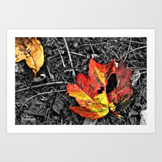 Color Pallette Art Print