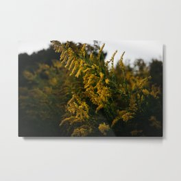 Goldenrod Metal Print