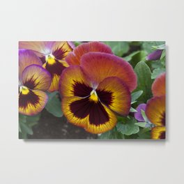 Pansy Painted Metal Print