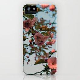 Malus Brandywine Crabapple Blossom iPhone Case