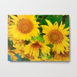Brilliant Bunch of Sunflowers Tilt Shift Photograph Metal Print
