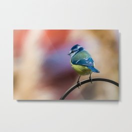 Blue Tit UK Metal Print