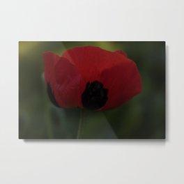 Red Poppy Flower Metal Print