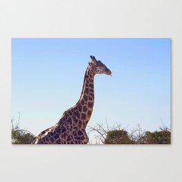 Giraffe Doobie Canvas Print