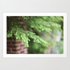 Evergreen Art Print