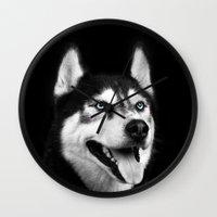 husky Wall Clocks featuring Husky by Isaloha Photography
